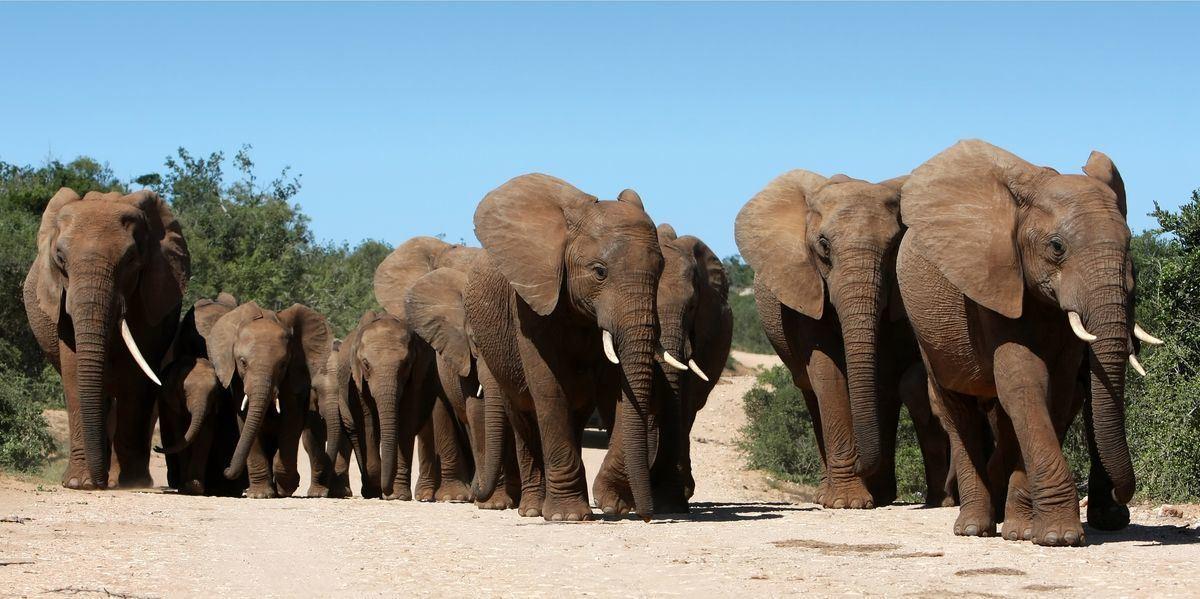 Elefantenherde im Addo National Park © Duncan Noakes/AdobeStock